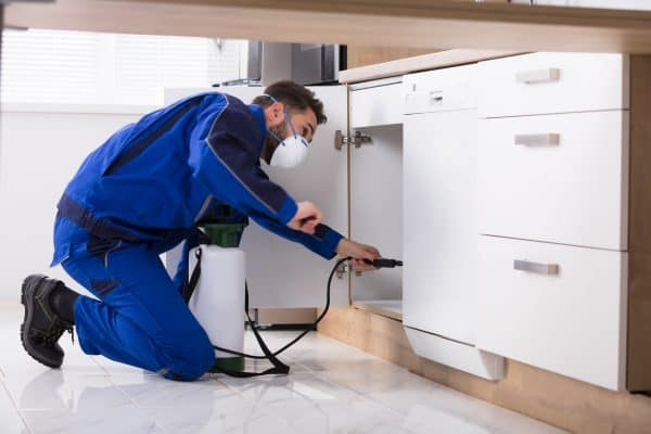 What is the difference between a pre-purchase inspection and a termit inspection?