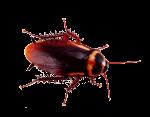 cockroach exterminator services