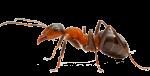 ant pest control services Bendigo