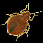 cockroach pest control bendigo