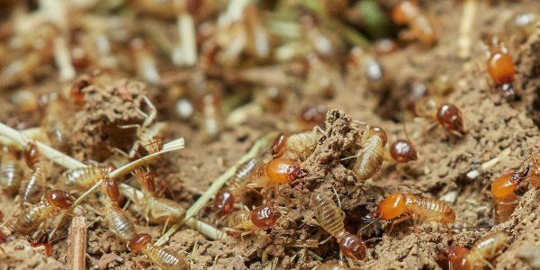 Termites Go Pest Pest control